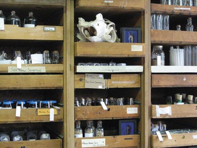 The Bigfoot Research Center: muestras criptozoológicas por doquier